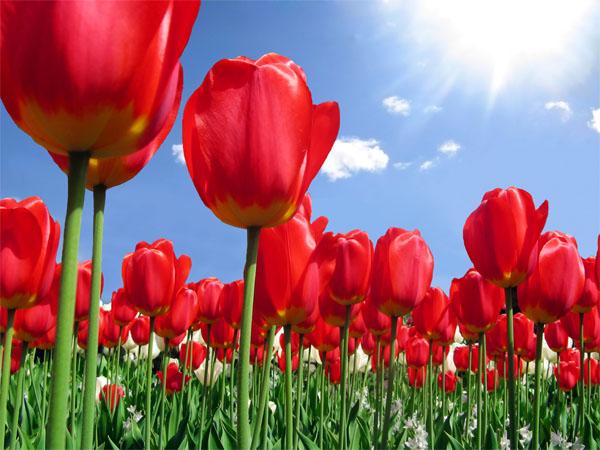 Wiosenny Bal Parafialny